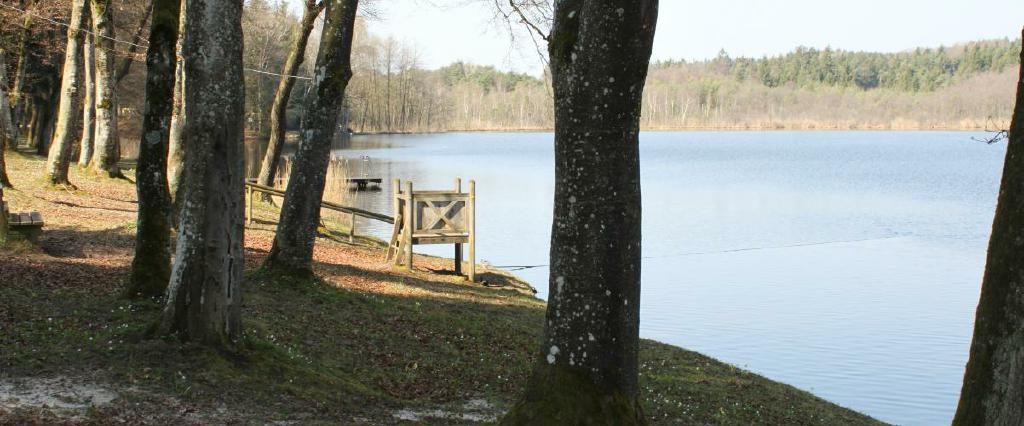 Ein Spaziergang um den Holzöstersee in Franking, Oberösterreich. Genießen Sie Ihren Urlaub in der Pension Rosengarten!
